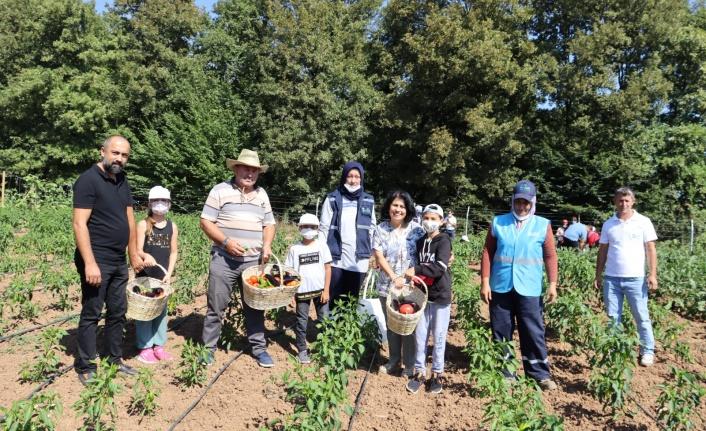 Tarımsal Üretim Bahçesi'nde  sebzeleri çocuklar topladı