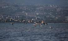 Körfezde flamingolardan görsel şölen
